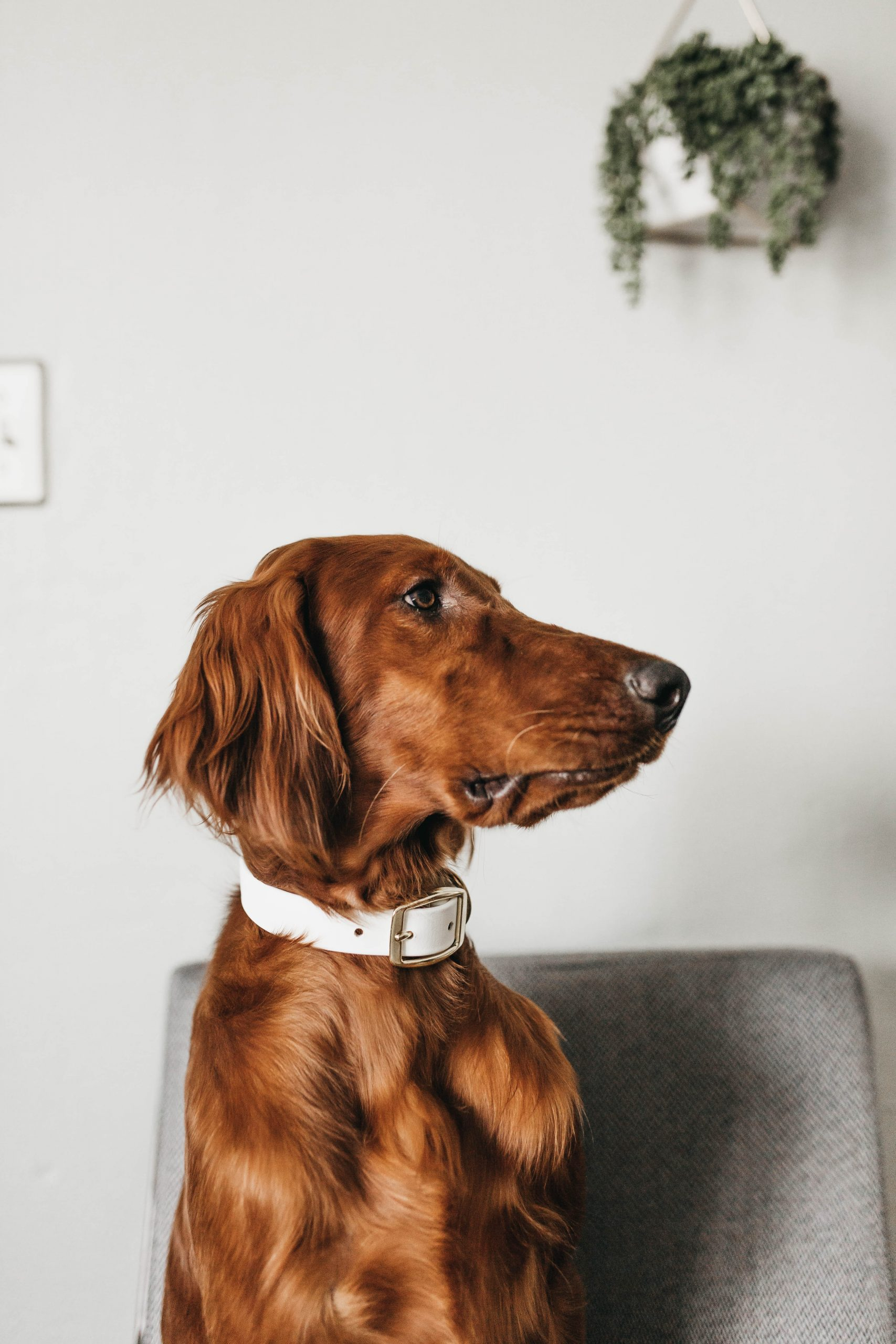 dog in an apartment